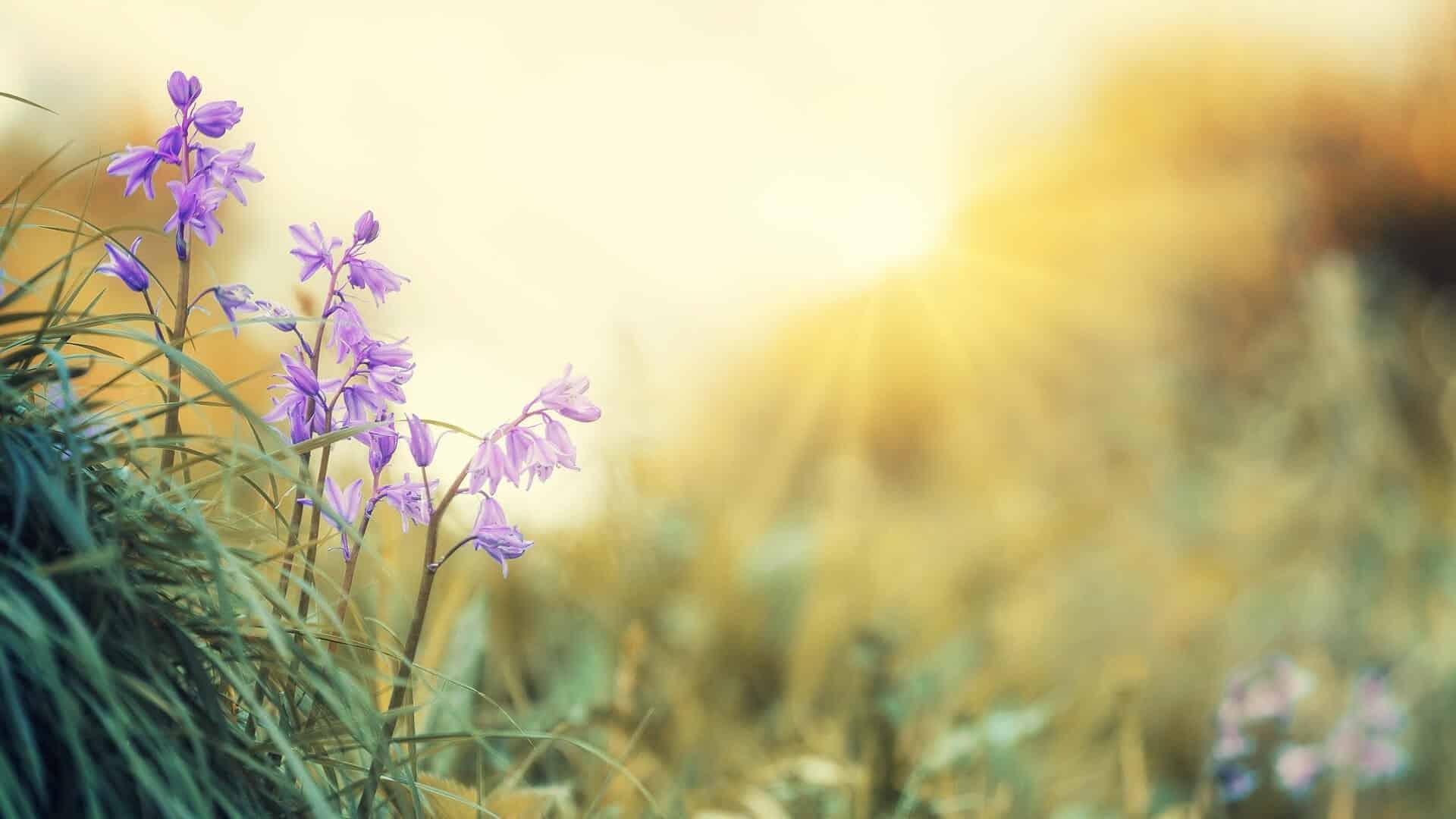 9 liečivých rastlín, ktoré rastú v máji